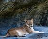 Wildlife : 3 galleries with 71 photos